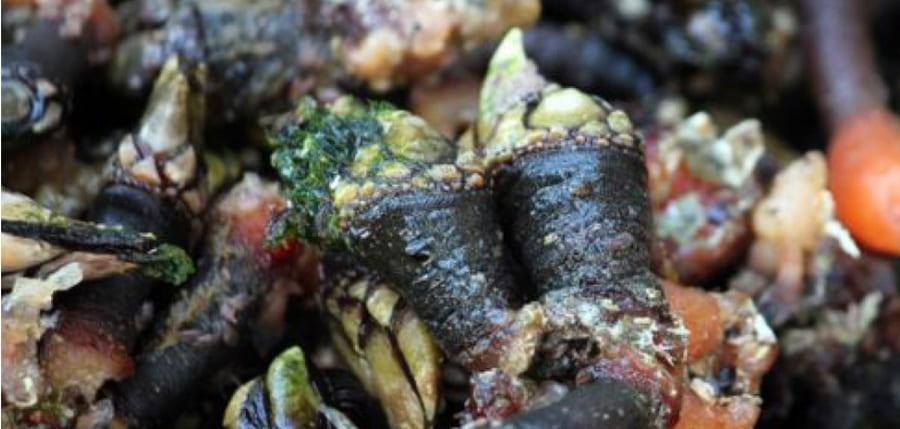 Gastronomia da Ericeira